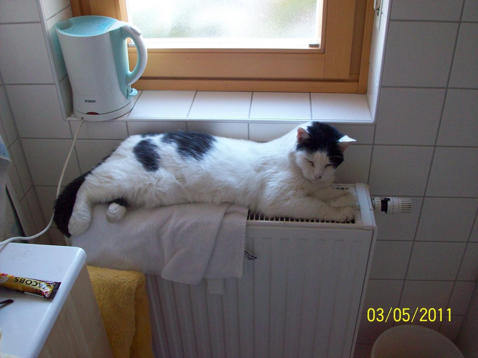 Murly keeps himself warm